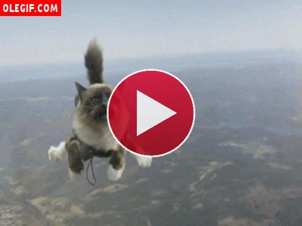 GIF: Un gato paracaidista