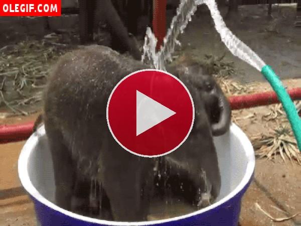 Refrescando a dos pequeños elefantes