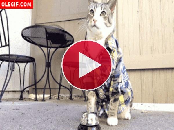GIF: A este gato le gusta que le den de comer cuando toca el timbre