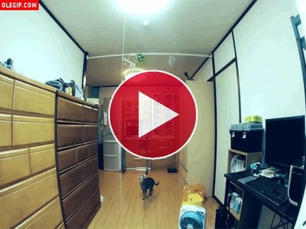 Mira cómo salta este gato para intentar apagar la luz