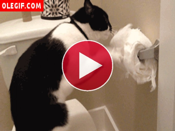 GIF: La pasión de este gato es destrozar el papel higiénico