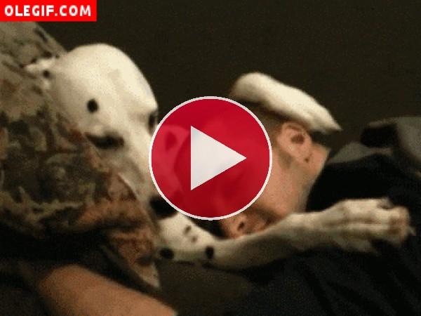 Mirad a este perro cómo acaricia la cabeza de su amigo