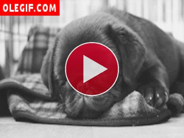 GIF: Mirad cómo duerme este perrito