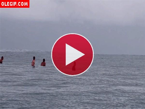GIF: Estás dándote un baño en la playa y de repente... ¡aparece una ballena!