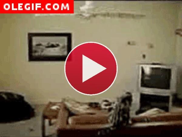 GIF: ¡Peligro! Hay un gato girando en el ventilador