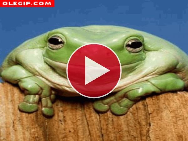 Esta rana usa Profident para tener una buena sonrisa