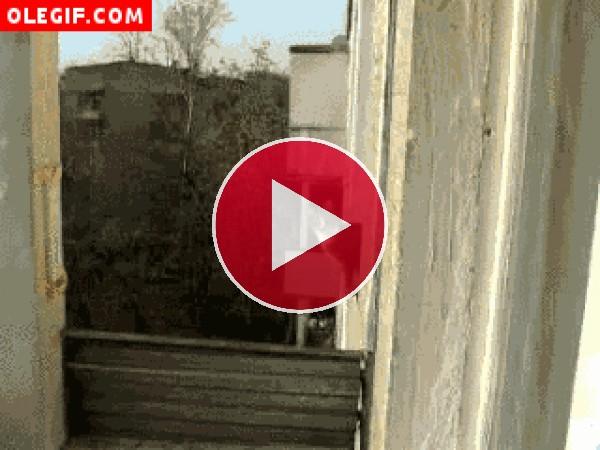 GIF: Vaya salto pega este gato para acercarse a cotillear