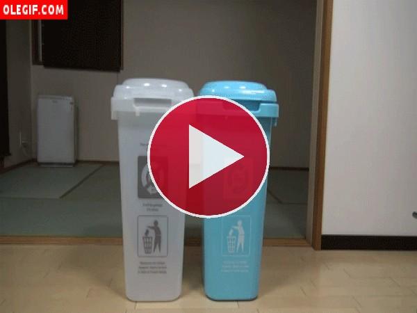 GIF: Mira a este gato escondido en el cubo de reciclado