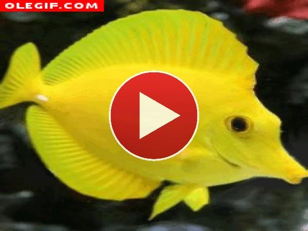 Observa el movimiento de este pez tropical