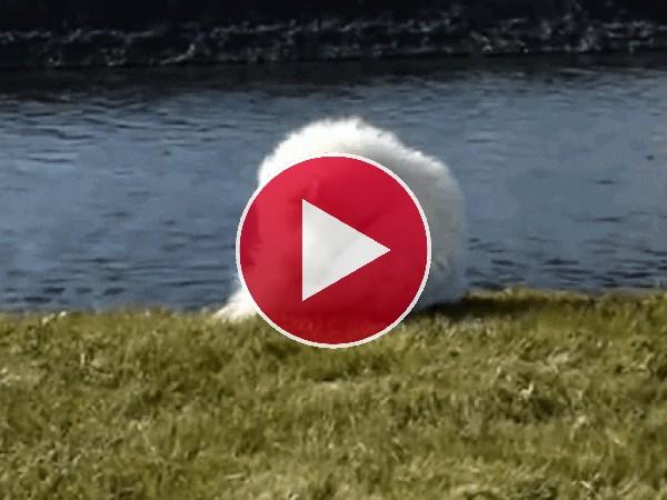 GIF: Este perro se pelea con su cola y acaba en el agua