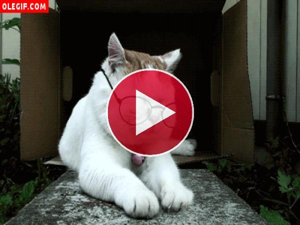 Mirad cómo se quita las gafas este gato