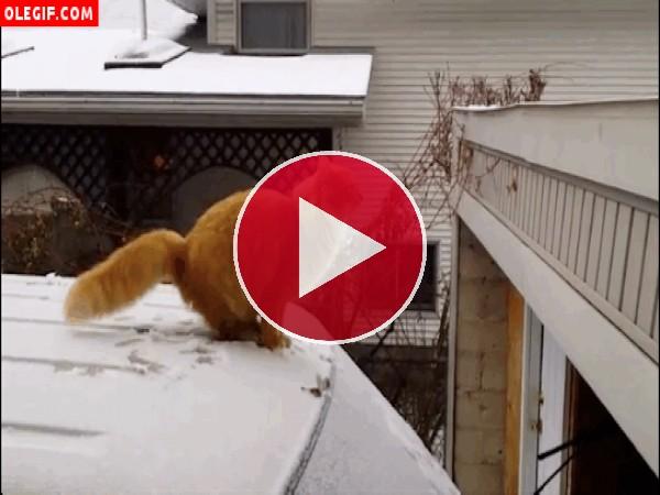 Este gato resbala al caminar sobre un coche nevado