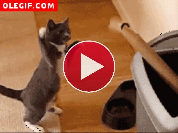 Este gato practica boxeo con un rollo de papel