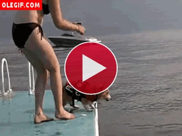 GIF: ¡Perro al agua!