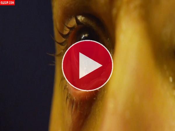 GIF: Mirad como sale el gusano del ojo
