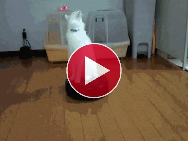 Esta gato se ha quedado hipnotizado sobre la aspiradora