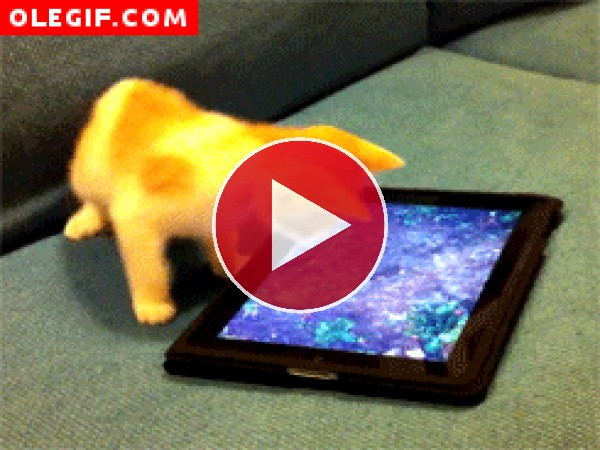 Este gato intenta capturar al pez virtual