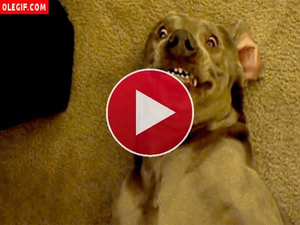 """GIF: Este perro se parece a la hiena loca de """"El Rey León"""""""