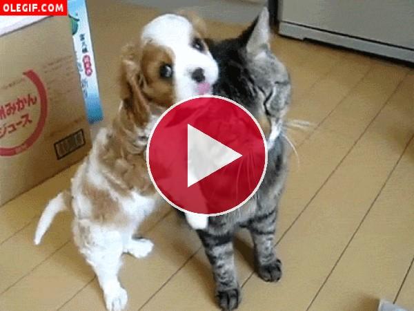 GIF: Este gato se deja querer por el cachorro