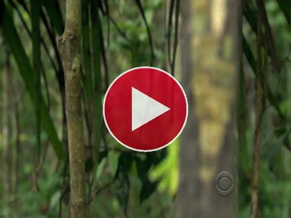 GIF: Mirad a este tarsero cazando un saltamontes