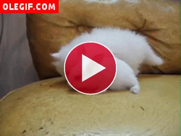 Este gatito está inspeccionando al pequeño conejo