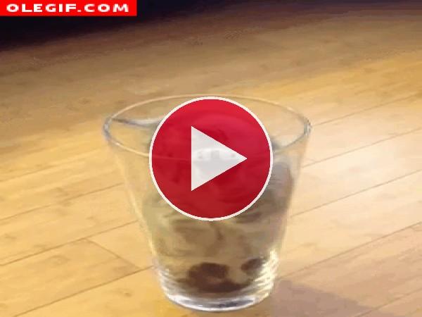 GIF: Este gatito quiere que le dejen tranquilo dentro de su vaso