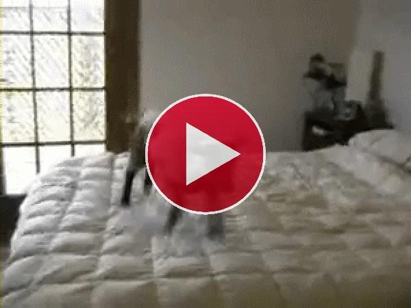Este corderito no para de brincar sobre la cama