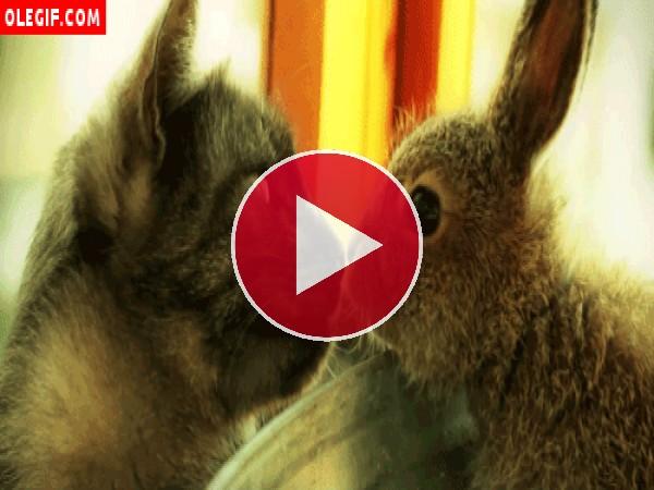 GIF: Mira qué buenas migas hacen el gato y el conejo