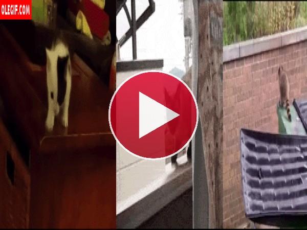 Tres gatos lanzándose al vacío