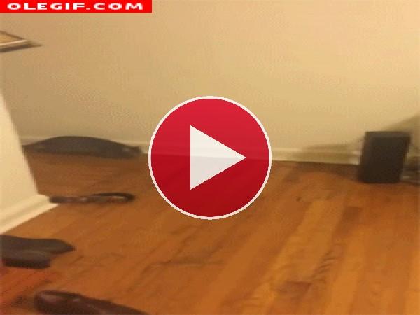 GIF: Menudo salto da el gato para que lo cojan en brazos