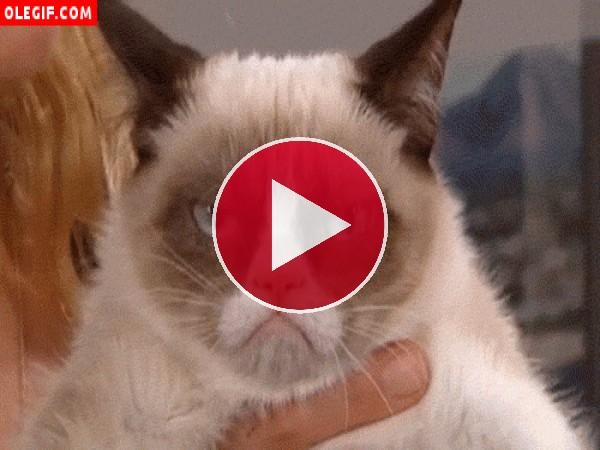 GIF: Este gato está enfurruñado