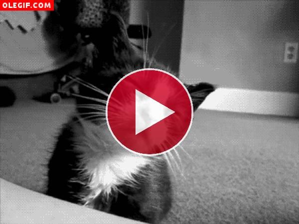GIF: Este pobre gatito tiene sueño