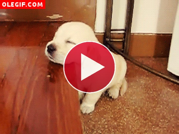 GIF: Este perrito se ha quedado dormido