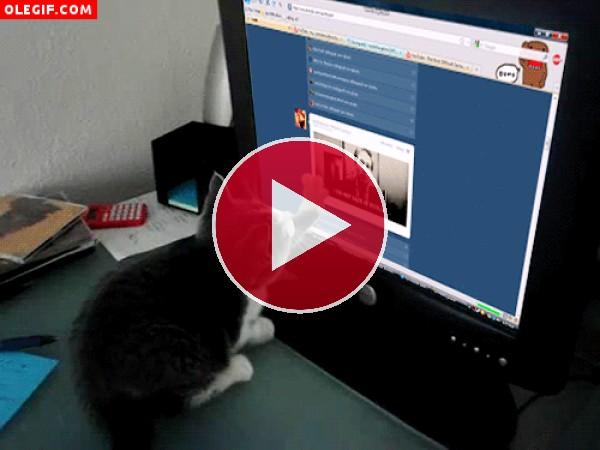GIF: A este gato le gusta leer las noticias en internet