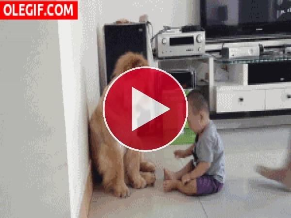 Mira cómo están de compenetrados el niño y el perro
