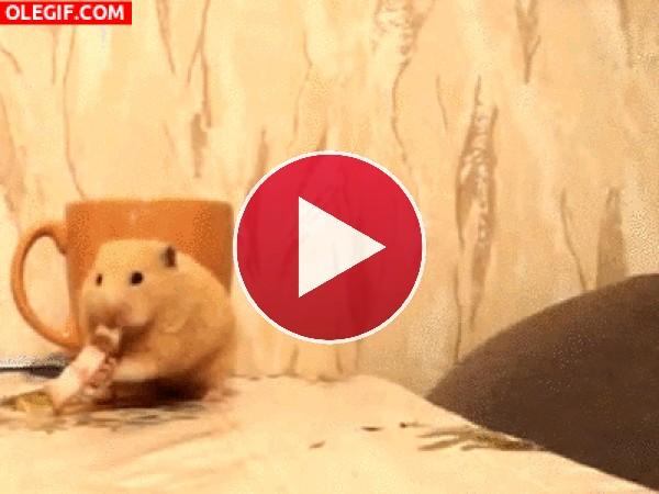 Este hámster no se deja intimidar por el gato y sigue comiendo su trozo de queso