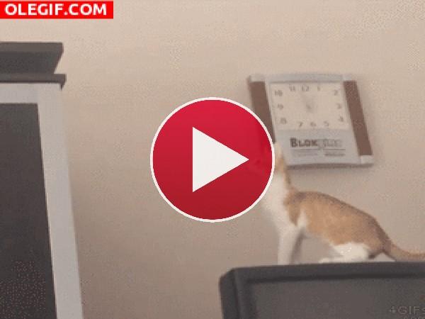 GIF: Menuda voltereta da en el aire este gato