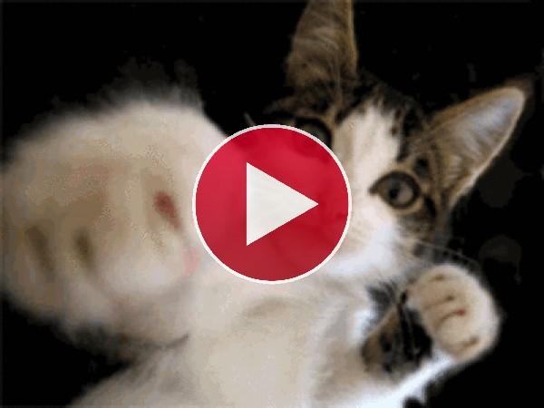 ¿Un gato boxeando?