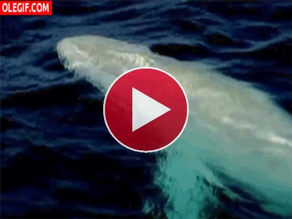 Pequeña ballena nadando en el océano