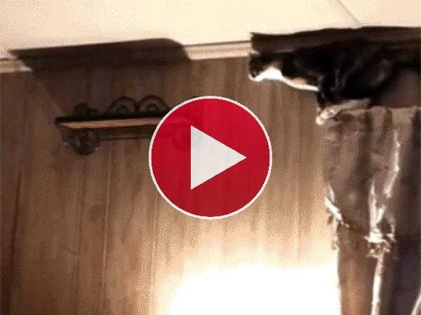 Vaya golpe se da el gato al caer de la pequeña estantería