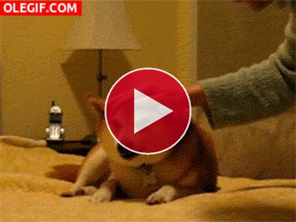 Parece que a este perro no le gusta que le acaricien