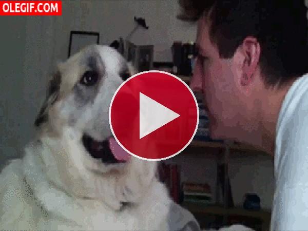 GIF: ¡Vaya bofetón da este perro!