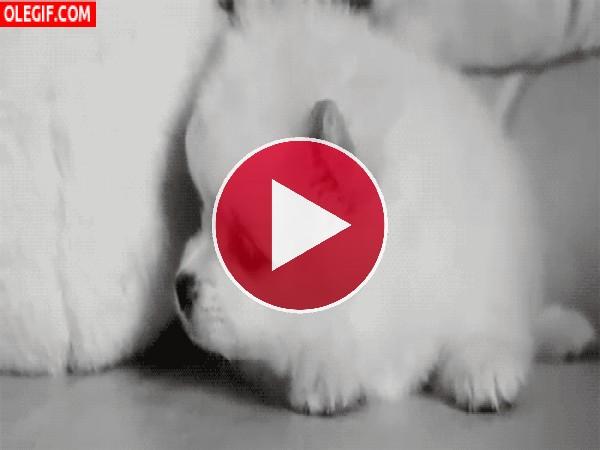 Un lindo perrito moviendo la cabeza