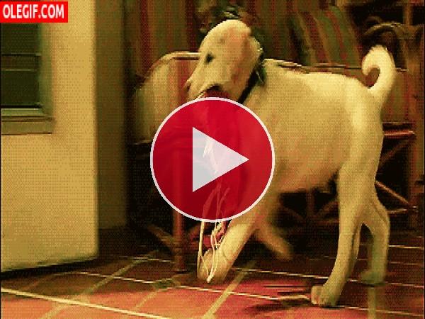 GIF: Este perro acaba de robar un sujetador