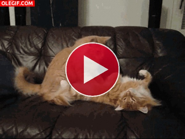 Masaje gatuno sobre un sofá