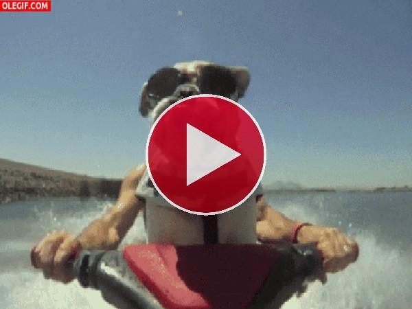 Un hombre-perro pasándolo pipa en una moto de agua