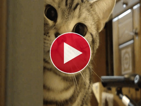 Un gato te observa