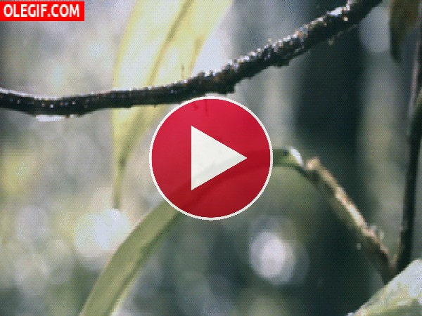 GIF: Esta rana salva su vida gracias a la rama