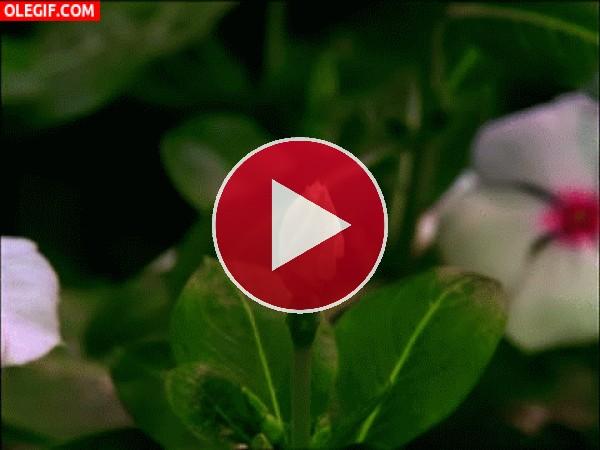 GIF: Flor abriéndose a gran velocidad