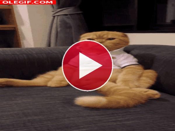 GIF: Un gato muy pijo